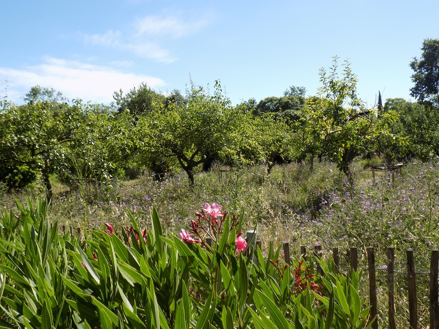 jardin anglais montpellier