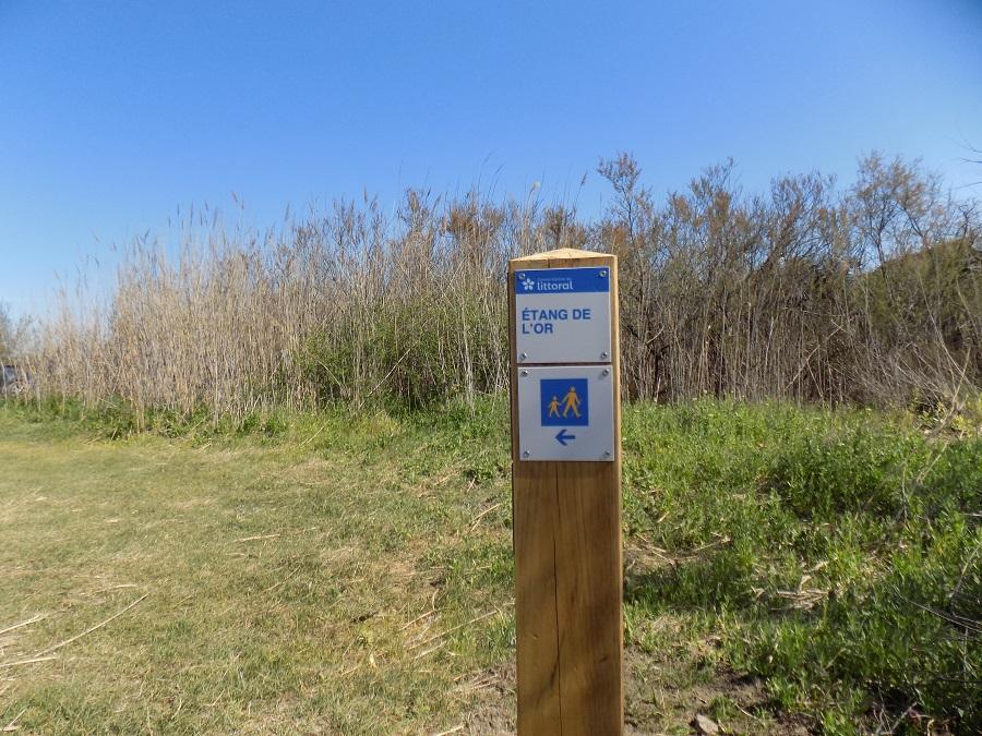 promenade étangs sud montpellier