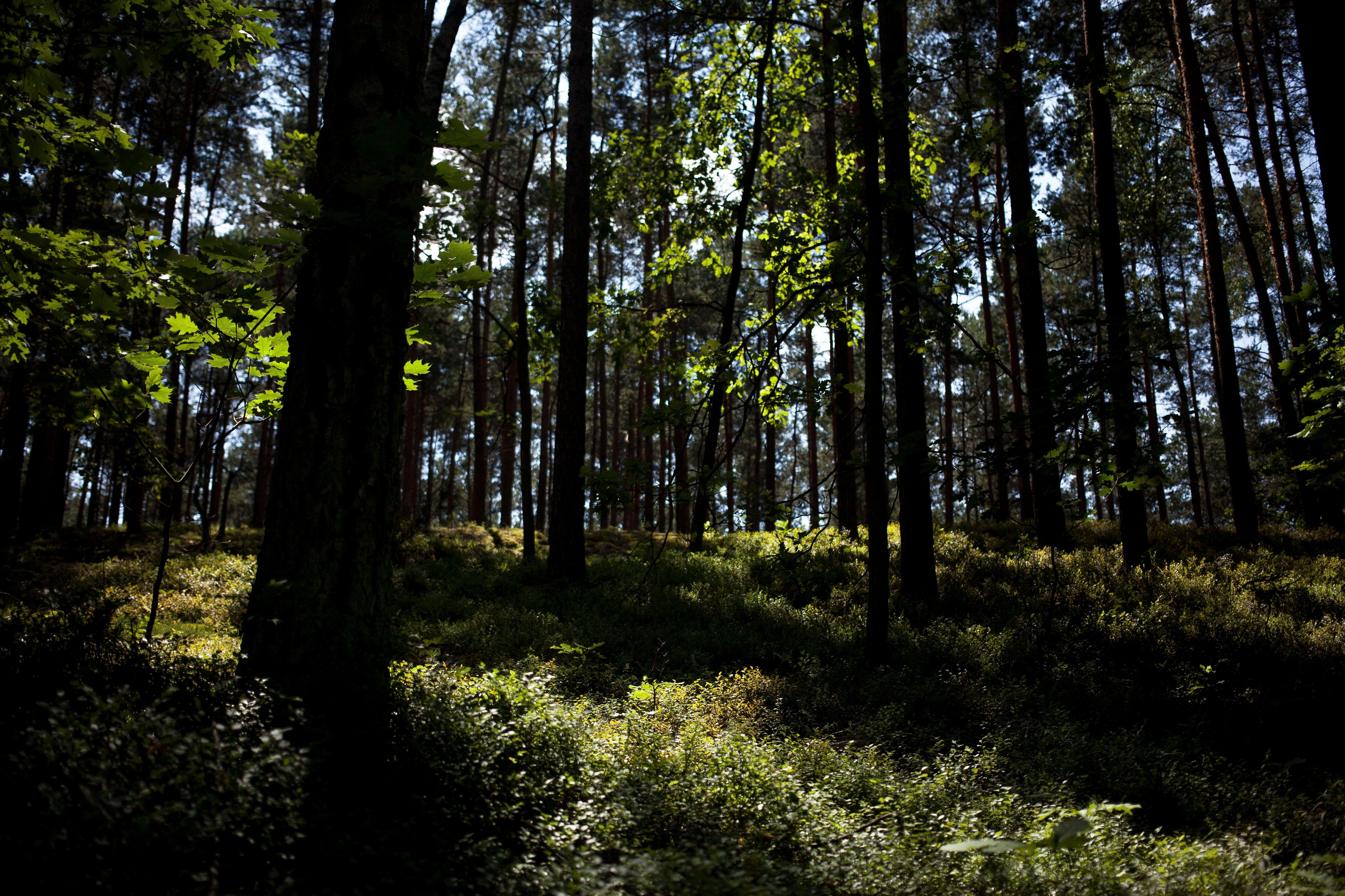 Une forêt près de Zabiezki, en Pologne, le 11 juin